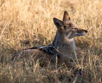 Botswana-163