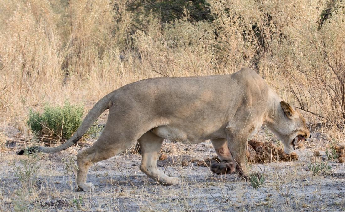 Botswana-51
