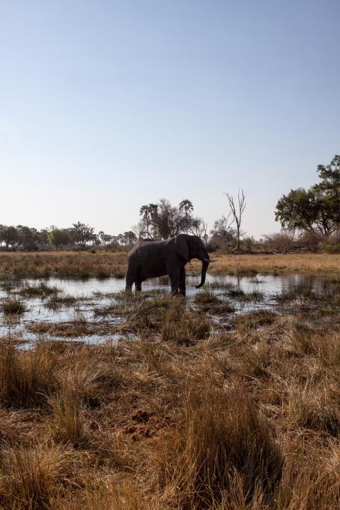 Botswana-63